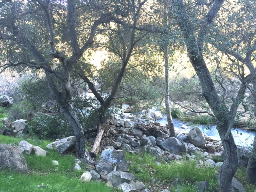 Elfin Forest stream