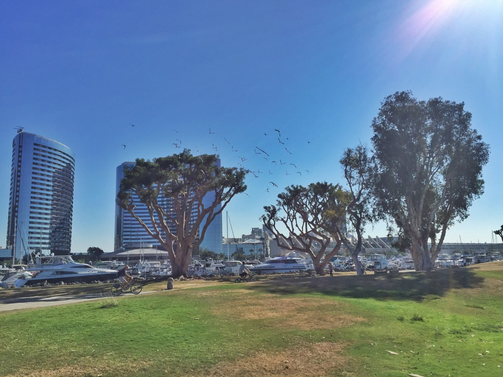 Embarcadero Marina Park North