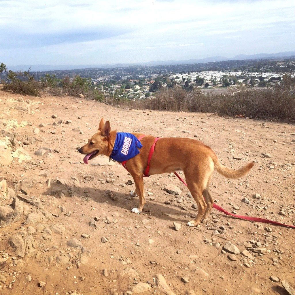 Harley hiking with Giants bandana