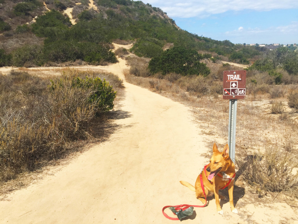 harley at trail sign