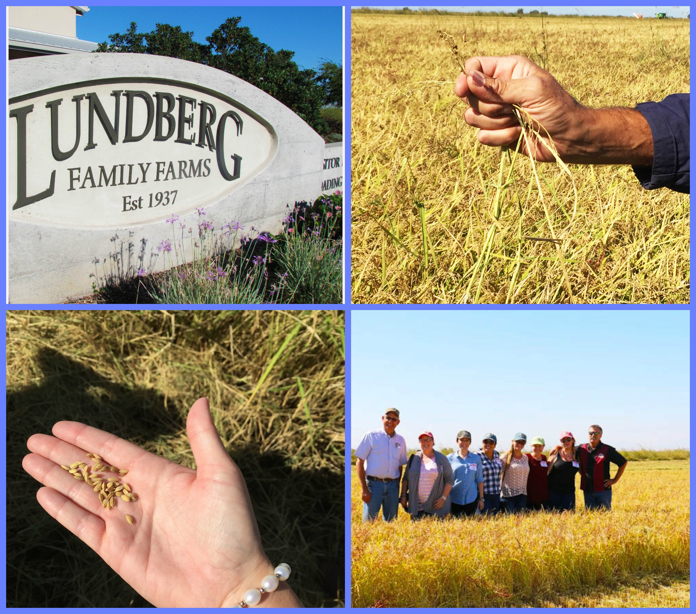 Lundberg Farms Collage