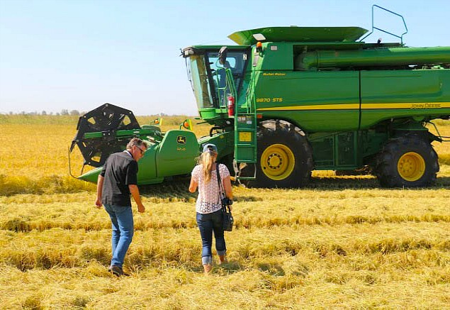 A Trip to Lundberg Family Farms in NorCal During their Rice Harvest