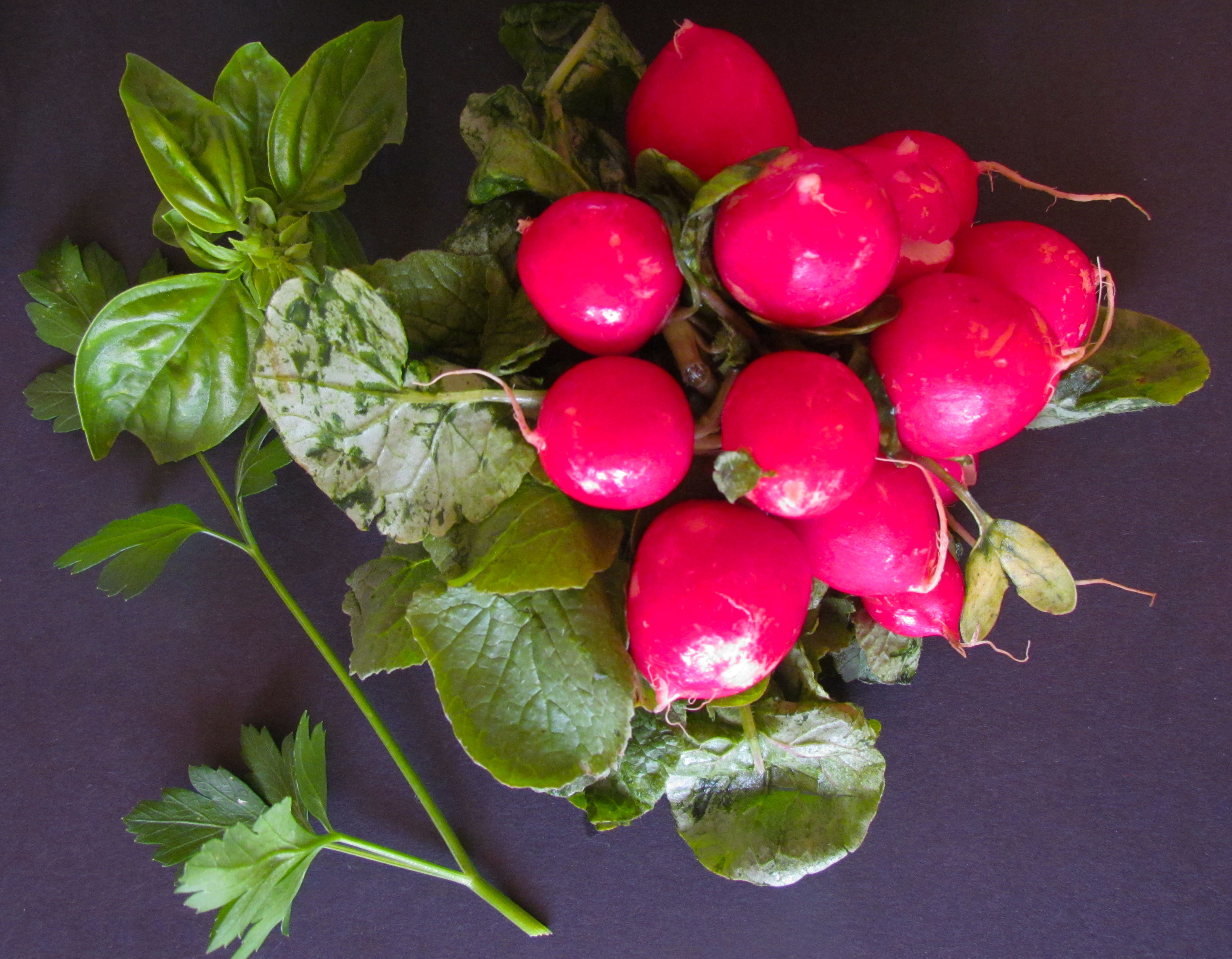 radishes and herbs