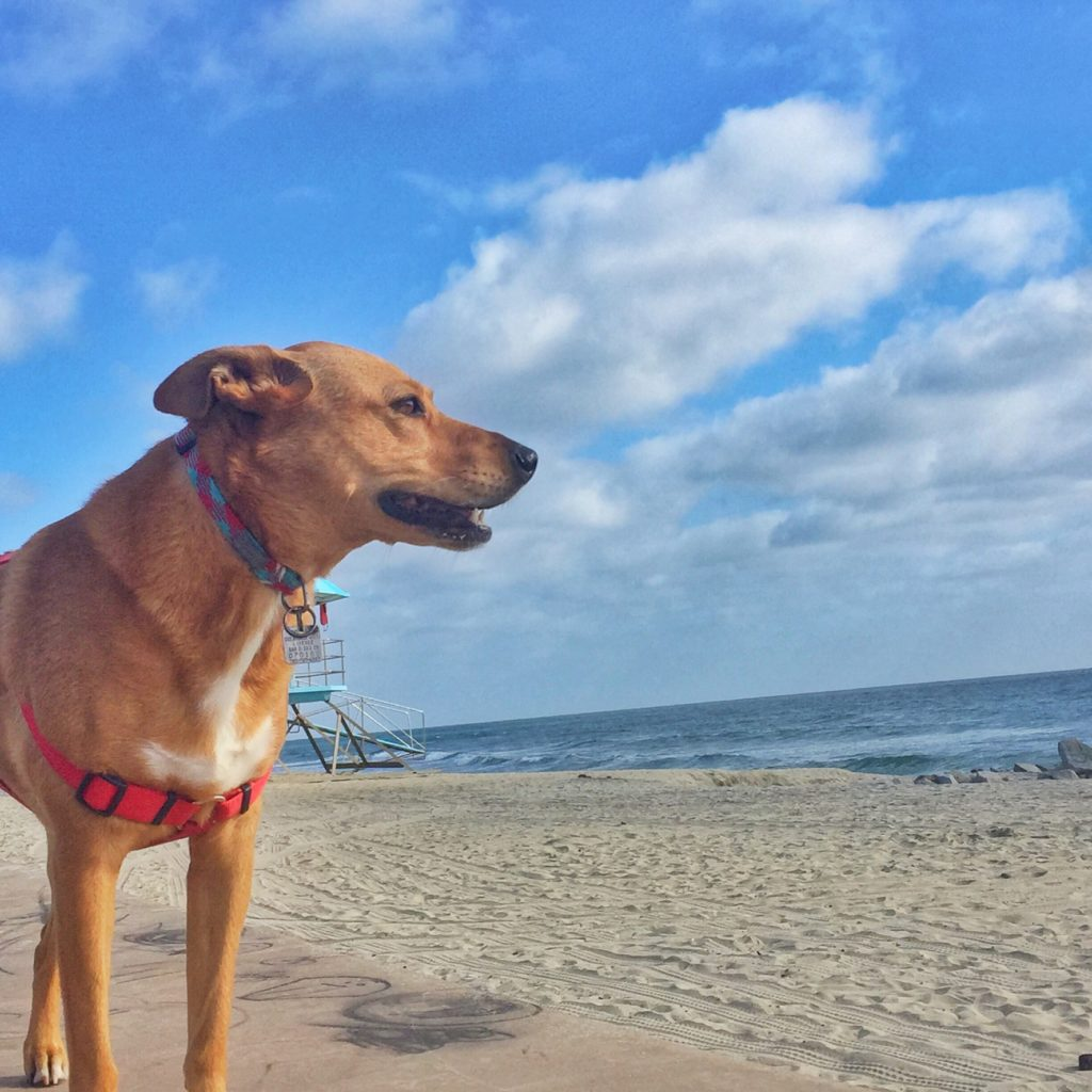 Harley beach walk-May 16