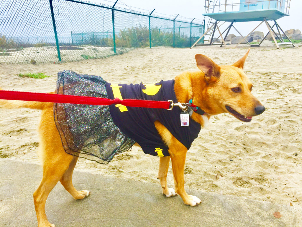 batpuppy-at-the-beach